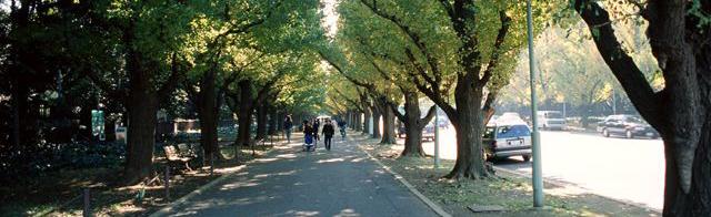 GREEN TOKYO MOVEMENTとは